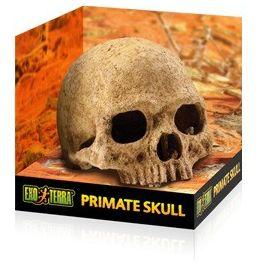 Exo Terra Primate Skull.