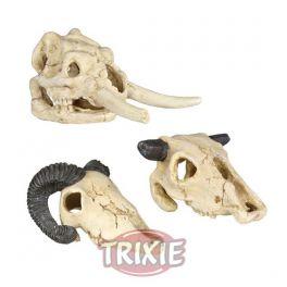 Cráneos, 8-11 cm