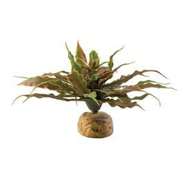 Cactus Estrella
