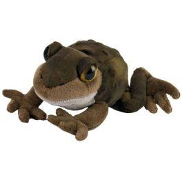 Sapo de espuelas oriental (Spadefoot toad)