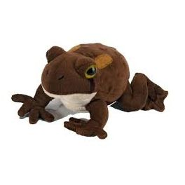 Sapo americano (American toad)