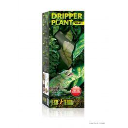 Dripper Plant, Exo Terra.