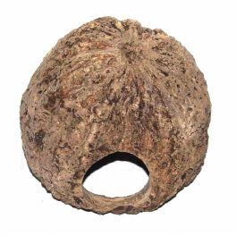 Cueva/cuenco de nueces de Brasil