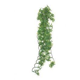 Ficus seda, Komodo. Varias medidas.