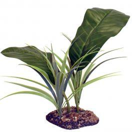 Evergreen Canopy, Komodo.
