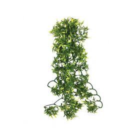 Croton Plant, Komodo. Varias medidas.
