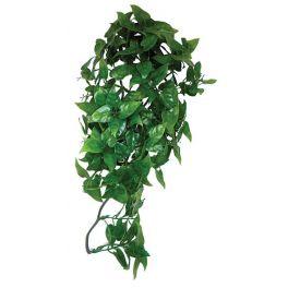 Split Philodendron, Komodo. Varias medidas.