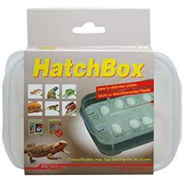 HatchBox, Lucky reptile.