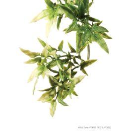 Exo Terra. Croton, Varios tamaños.