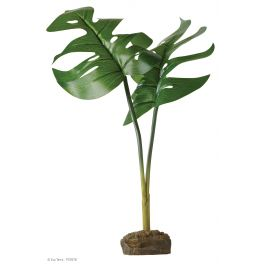 Philodendron - Smart Plant