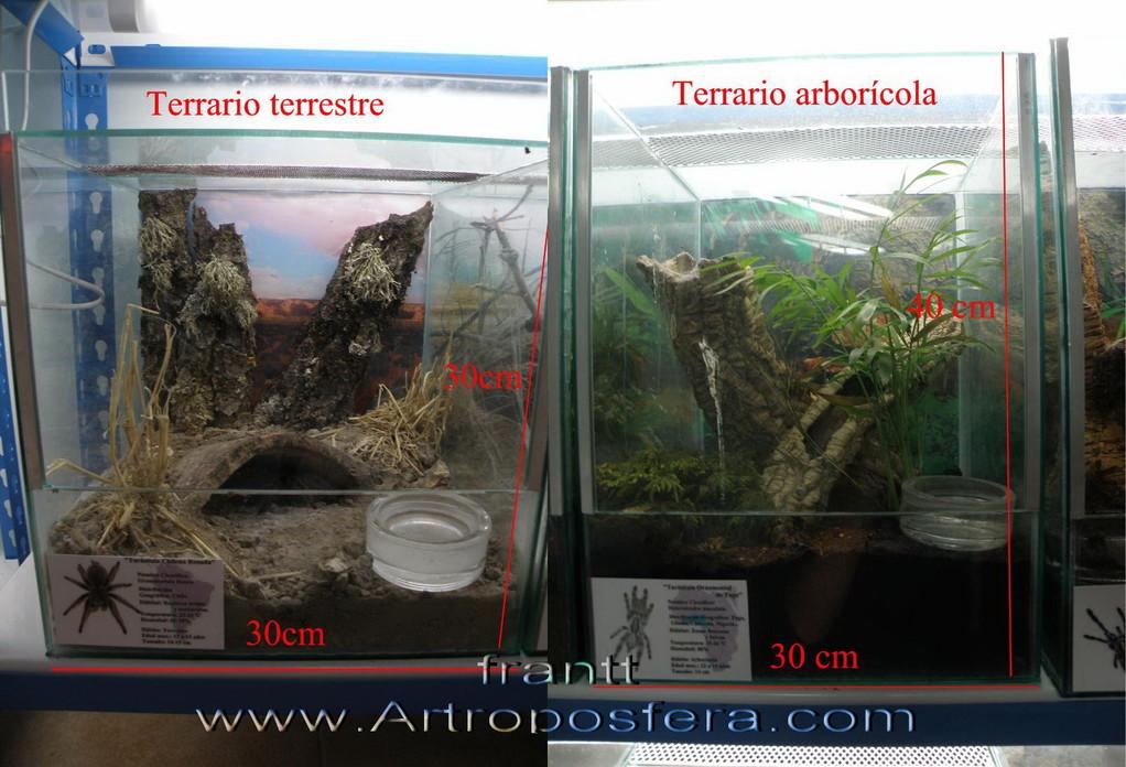 Terrarios tarantulas